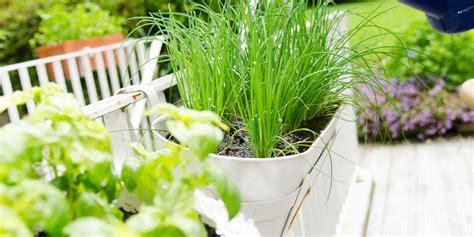 irrigazione vasi irrigazione vasi fai da te beautiful un tipico impianto