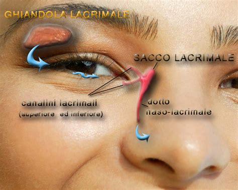 orzaiolo interno palpebra superiore le strutture accessorie dell occhio