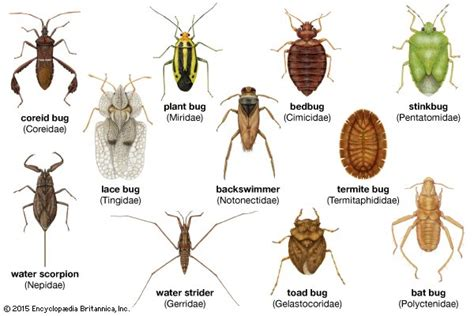 types of garden pests garden insect primer getting to common garden insect