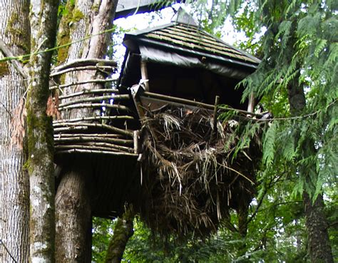 The Nesting House by The Nest A Wooden Treehouse That Sways 23 Ft The