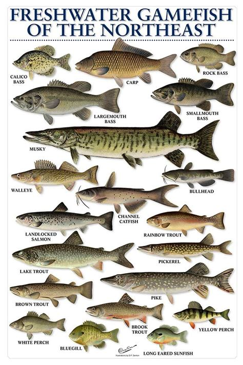 freshwater fish california freshwater fish species pictures to pin on pinterest pinsdaddy