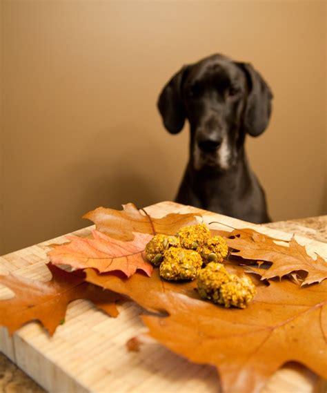 treat recipes pumpkin pumpkin spice treat recipes healthy paws