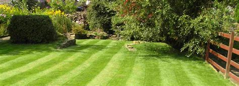 late summer lawn care summer lawn care rowlandscapes