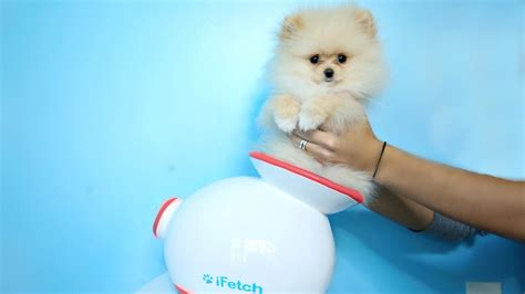 rclbeauty101 puppy testing out gadgets with new puppy