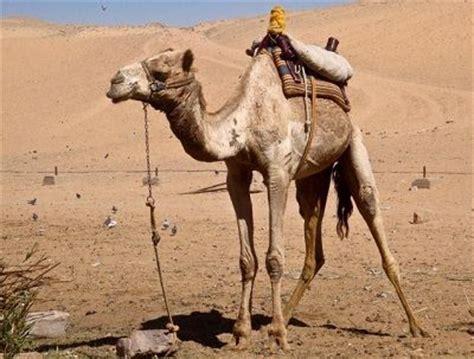 imagenes animales que viven en el desierto animales que viven en el desierto queanimal