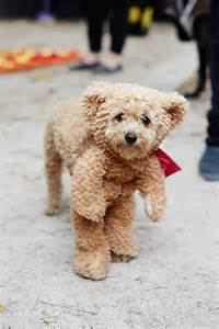 the best dog costumes ever york halloween and pet