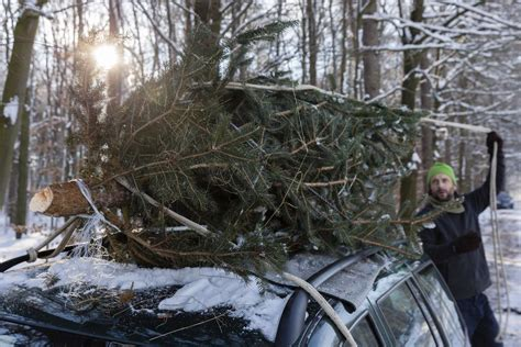 recycle your christmas trees in reno and sparks