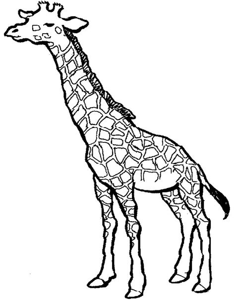 coloring pages giraffe cool coloring pages giraffe coloring pages