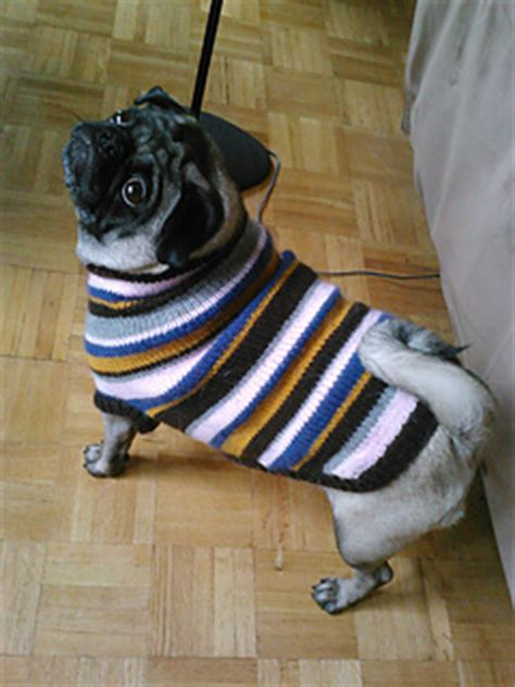 pattern for pug clothes ravelry pug dog sweater pattern by angelcatkins