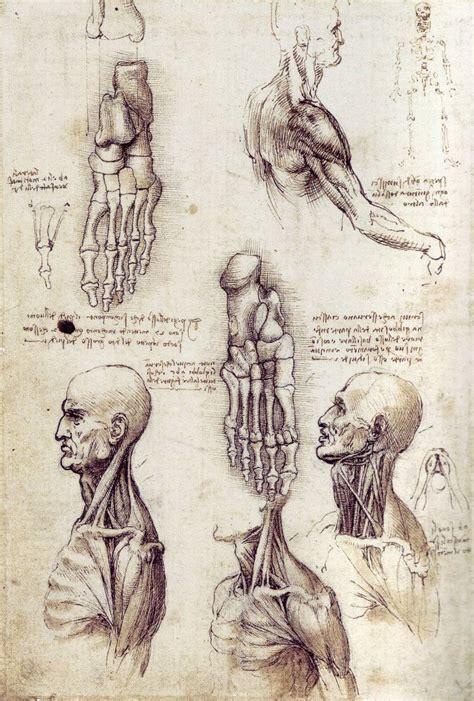 Sketches By Leonardo Da Vinci by Leonardo Da Vinci Anatomy Quotes Quotesgram