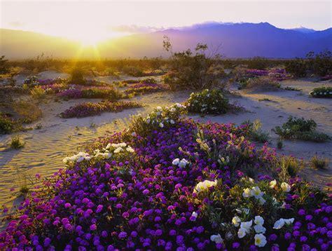 california desert cheaptickets travel deals