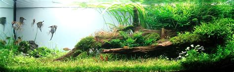 aquascape pictures galerie photos aquascape
