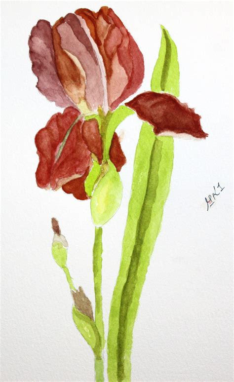 beginner s guide to botanical flower painting books botanical flowers in watercolor by michael lakin
