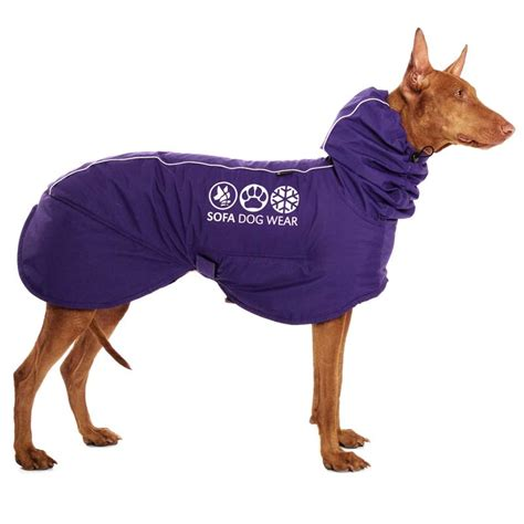 sofa dog wear sofa dog wear sofa dog wear tinos and lilly s wish list