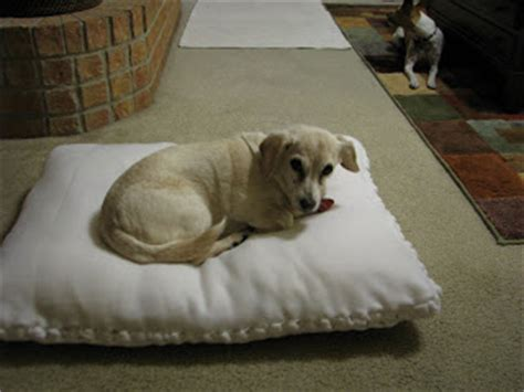 no sew dog bed 15 no sew diy pet beds for your best friend