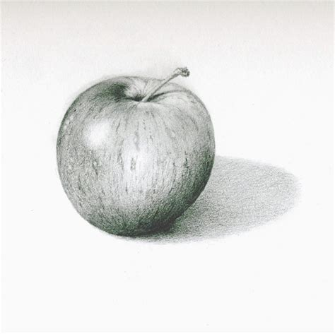 apple drawing this pencil drawing of an apple shows form it shows form