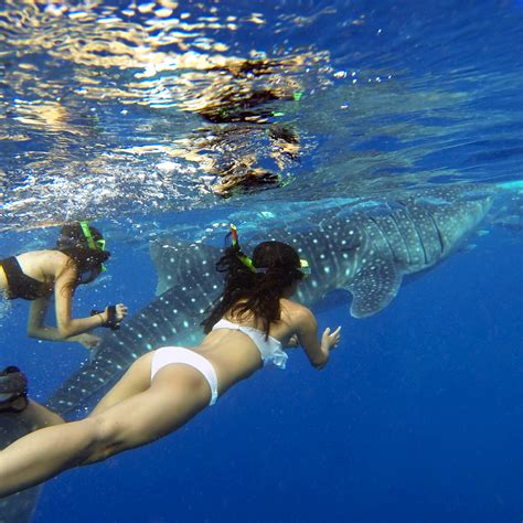 dive with whale sharks oslob whale shark tour philippines cebu snorkeling and diving