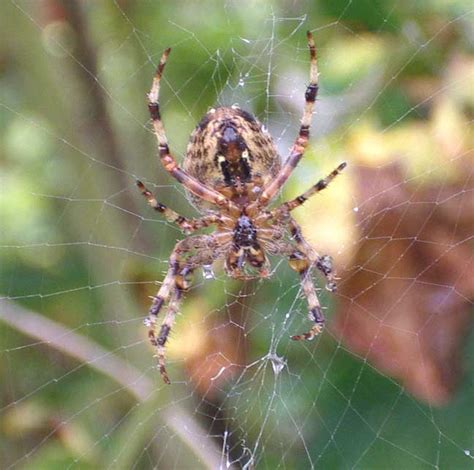 What Is A Uk Garden Spiders Habitat Garden At The Drive Shoreham By Sea