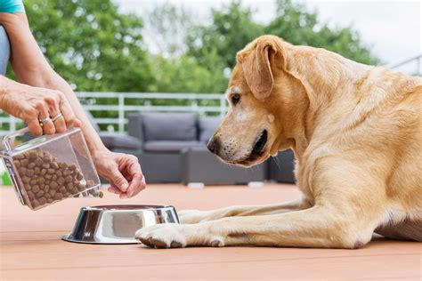 eating dry food  dogs definition  solution