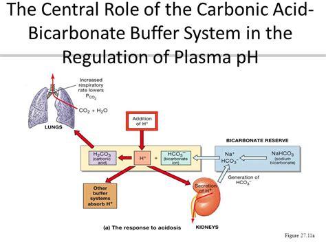 chp 24 acid base balance ppt