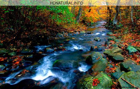wallpaper for desktop free download nature screensavers of nature free best hd wallpapers