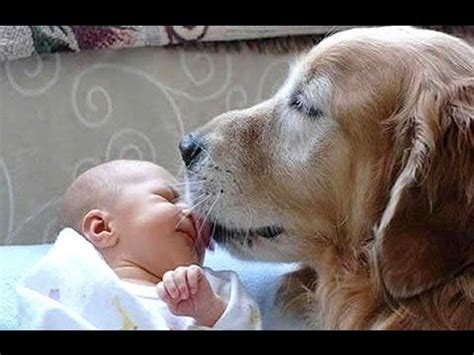 dogs meeting babies dogs meeting babies for time compilation from the coolest one