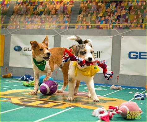 puppy bowl 2017 puppy bowl 2017 meet the dogs the more photo 3853417 2017