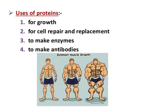 protein uses biology form 4 chapter 6 nutrition part 1