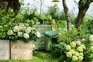 pflege hortensien im garten outdoor auftakt mit der gartenhortensie pflanzenfreude