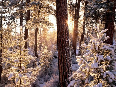 themes tumblr winter wallpapers winter desktop wallpapers and backgrounds