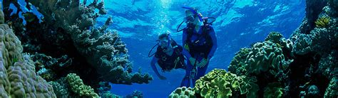 great barrier reef dive trips great barrier reef tours liveaboard dive trips cairns