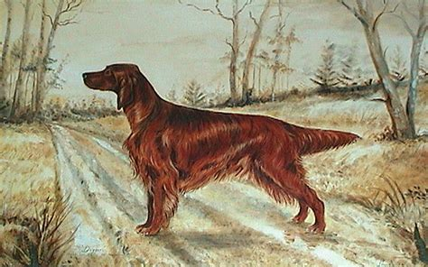 irish setter dog wallpaper drawn irish setter photo and wallpaper beautiful drawn