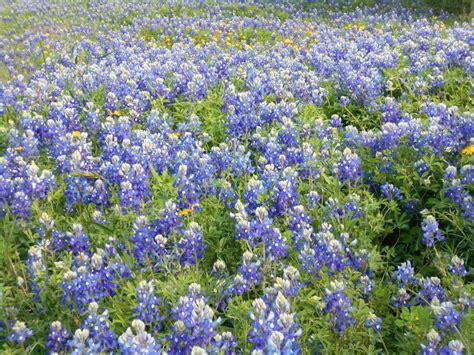 Garden Ridge Tx Official Website Garden Ridge Flowers