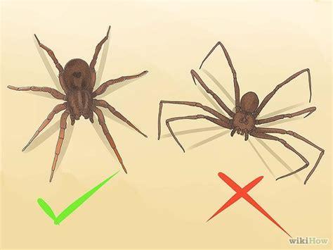 Garden Spider Vs Tarantula Identify A Wolf Spider Wolves A Wolf And Spider