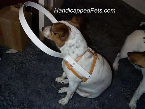 blind dogs hoop harness for blind dogs