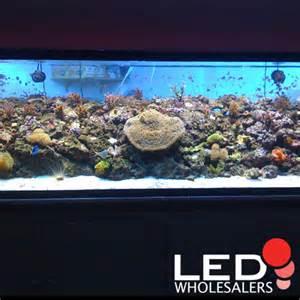 low light corals for sale ledwholesalers com