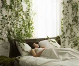 Best Plants For Bedrooms Green Home Decor That Cleans The Air Top Eco Friendly