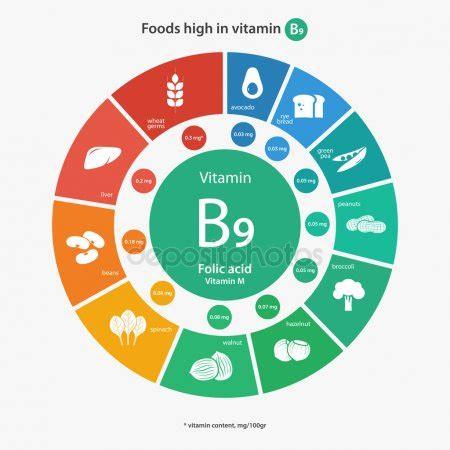 alimentos ricos en vitamina b9 vectores de stock de informacion nutricional