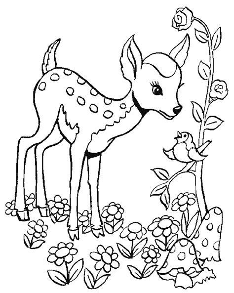 fawns coloring pages