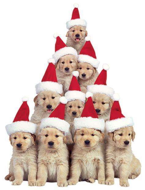 house golden retriever puppy magnet paper house