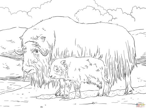 Musk Ox Mother And Baby Coloring Online  Super sketch template