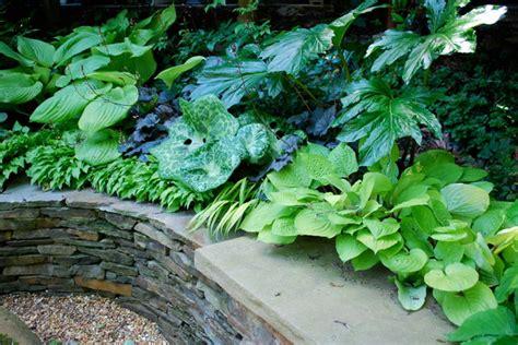 zone 6 garden plans shade garden ideas zone 6 home dignity