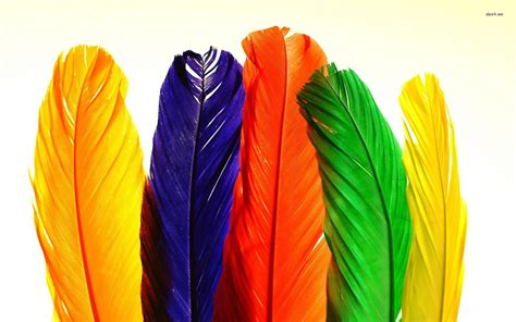 colorful feather colourful feather wallpapers www imgkid the image