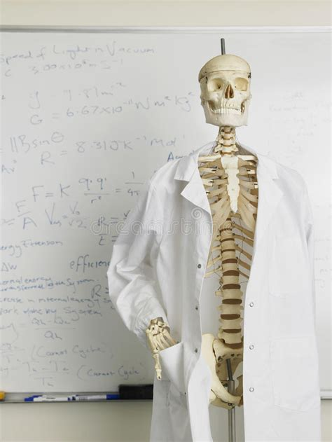 skeleton  lab coat  front  whiteboard stock photo