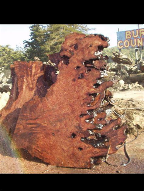 redwood burl slabs  woodworking