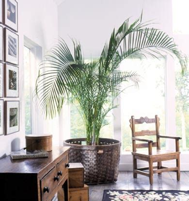 living room trees british colonial style on pinterest tropical decor