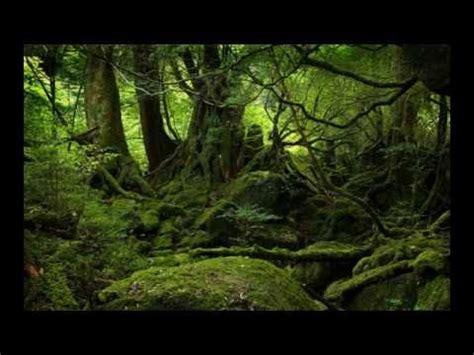 amazon hutan keindahan hutan amazon hijau angker youtube