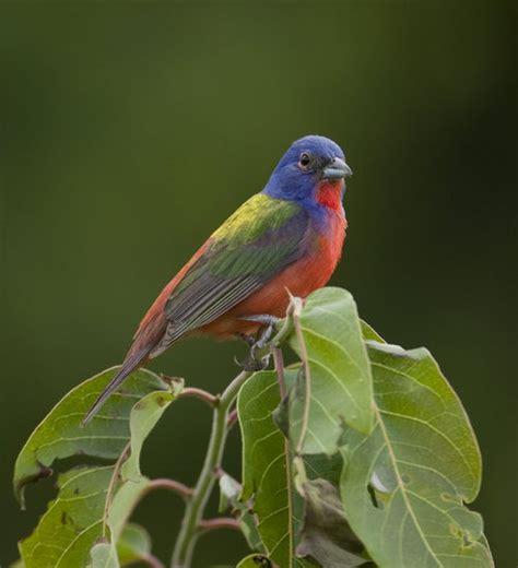 arkansas birds arkansasbirds twitter