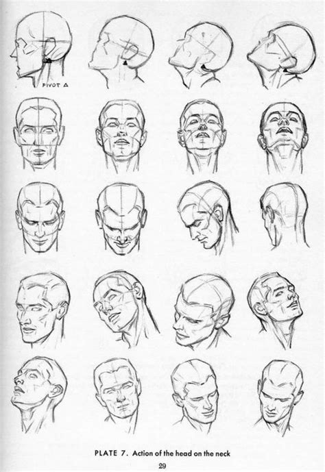 Drawing References by Anatomy References For Drawing Illustrations