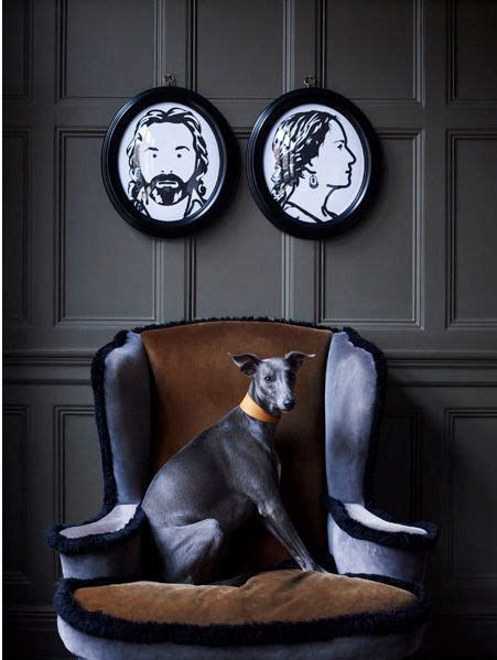 Ridiculously Cool Website Whippet Grey 1209 best whippets images on